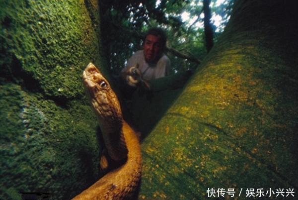 男子野外探险试图抓毒蛇,还没下手村民就叫他快离开