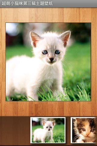把可爱小猫咪珍藏在手机里作为壁纸