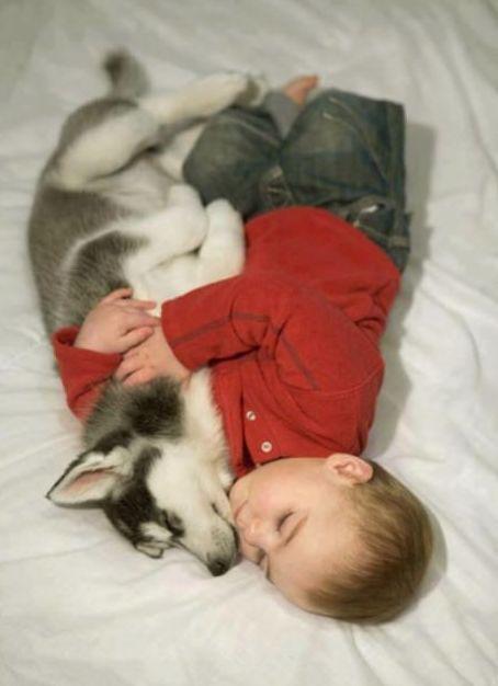 如果家有熊孩子,那么可能需要请一只狗保姆来帮忙了...
