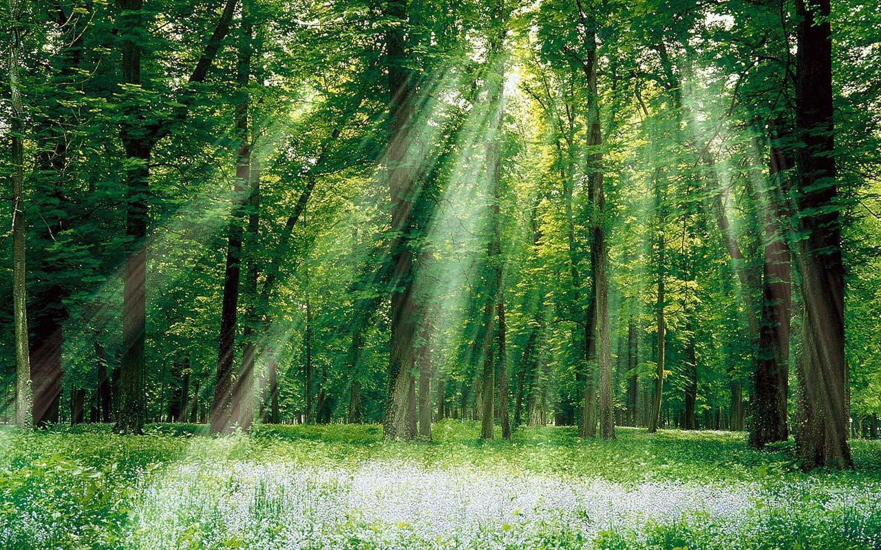 壁纸 风景 森林 桌面 1280_800图片