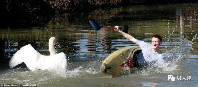 【转】北京时间     鹅这种生物,被它揍过才知道有多残暴 - 妙康居士 - 妙康居士~晴樵雪读的博客