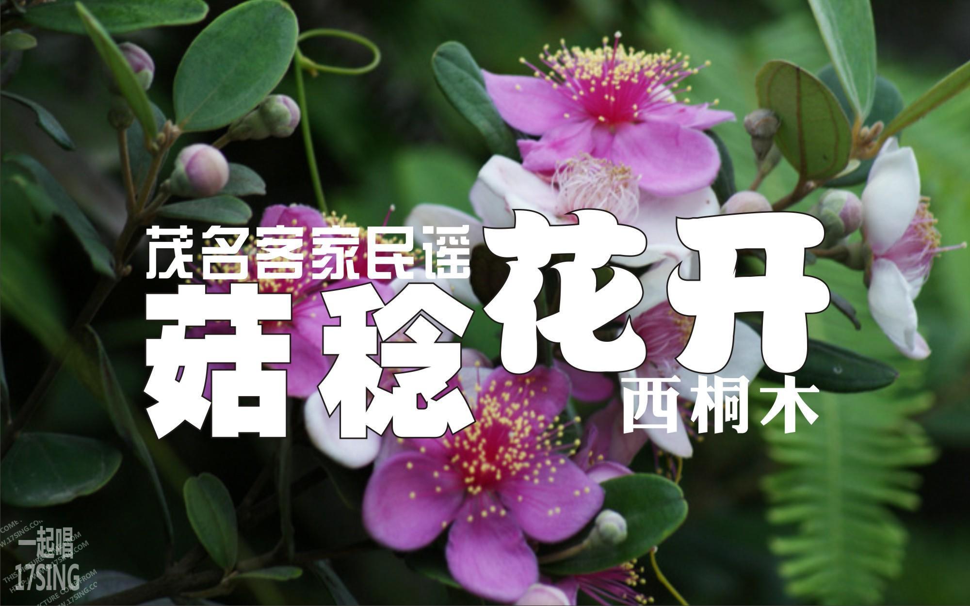 西桐木_360百科