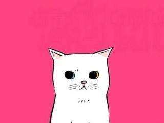 新手养猫指南之接猫篇